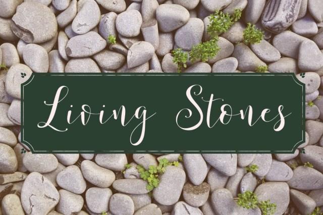 living stones 4