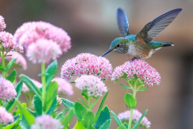 Bird in Flowers.png